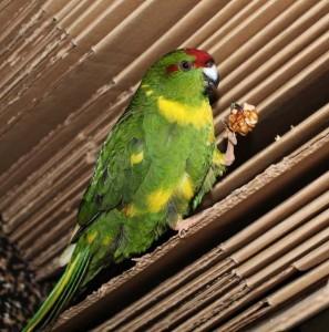 полезный корм для попугая