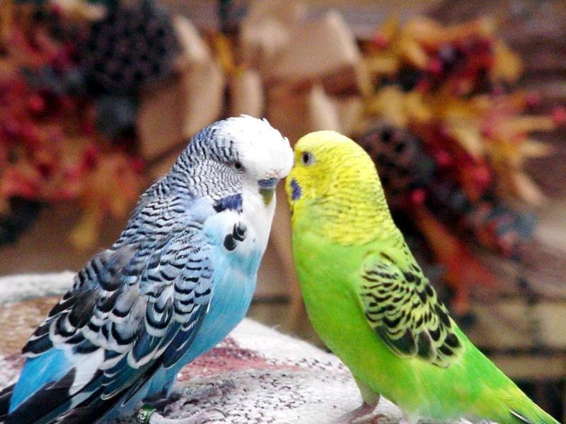 влажность для попугая