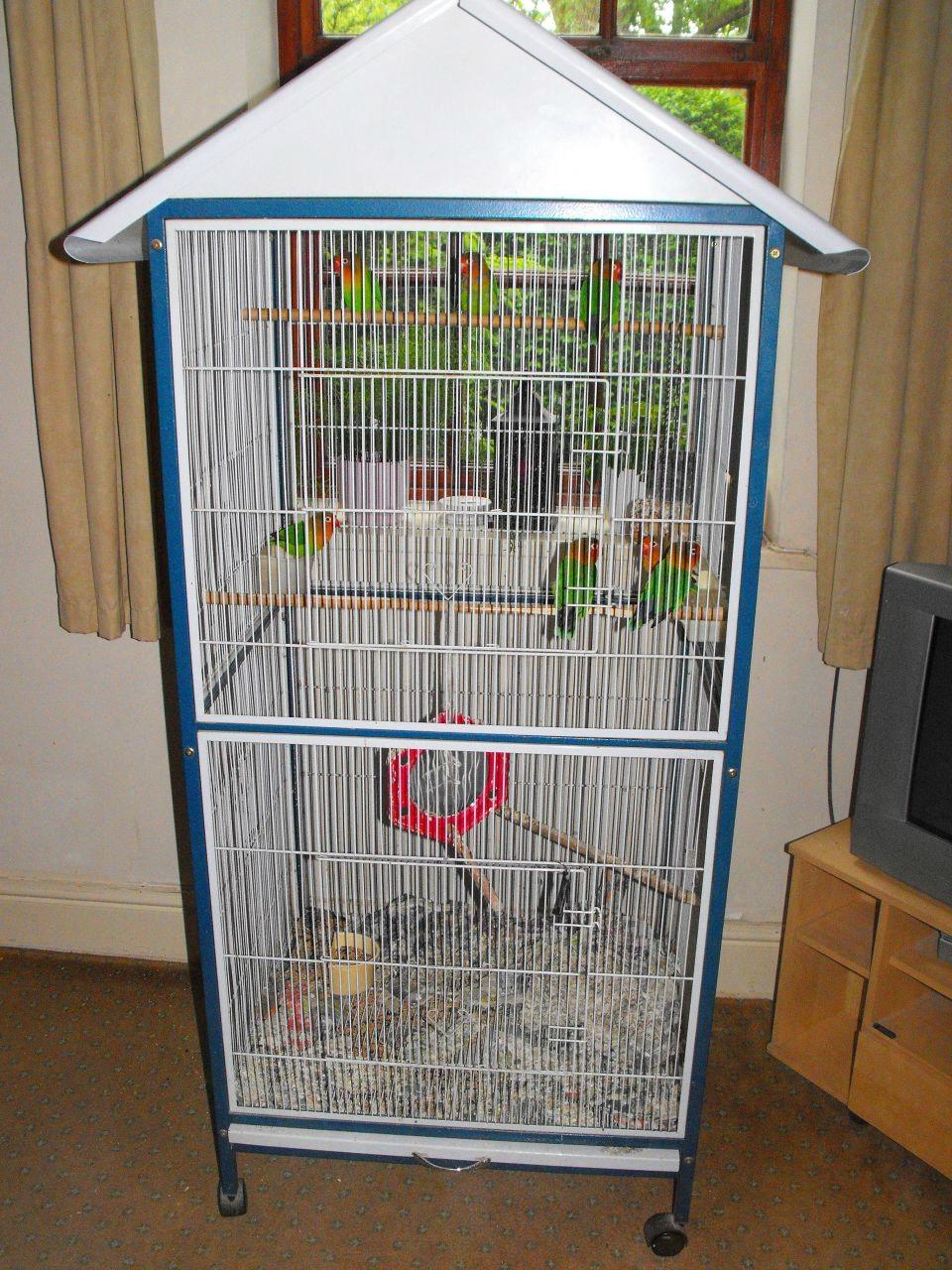 домики для неразлучников попугаев