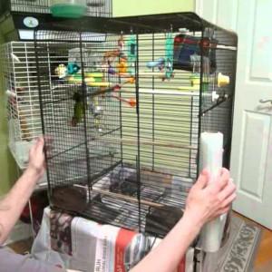 чистка клетки попугая