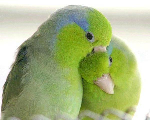 дезинфекция клеток попугаев