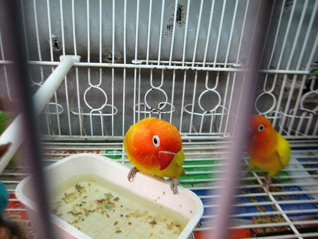 перевозка попугая