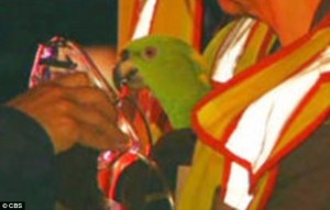 спасение попугаев