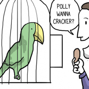 попугай прикол