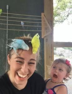 волнистые попугаи смешные фото