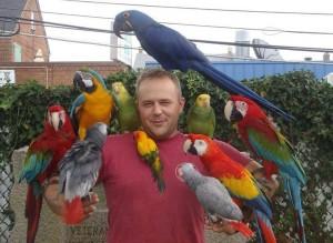 много попугаев фото