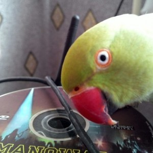 попугай и музыка
