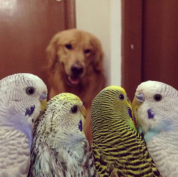 попугай и собака