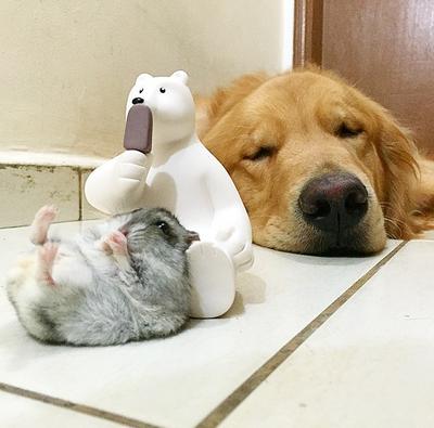 собака и хомяк