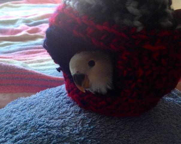 гнездо для неразлучника