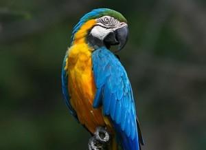 красивый попугай ара