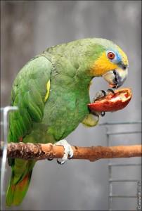 попугай кушает