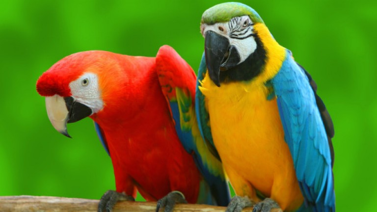 попугай характер
