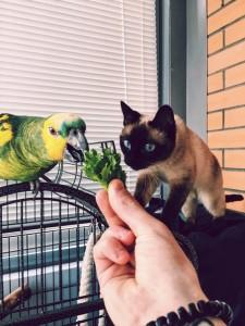 попугай и кот кушают