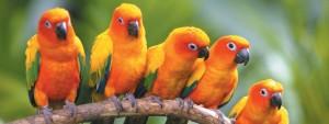 стая попугаев сидит