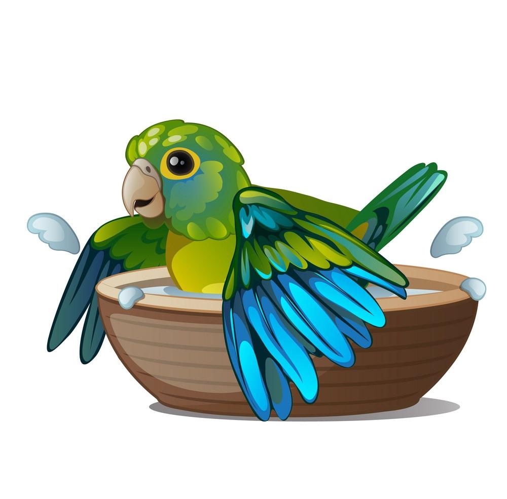 картинка попугай купается